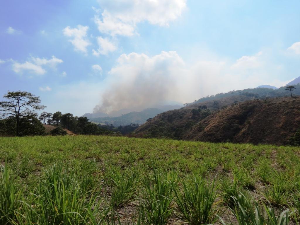La zona serrana la más dañada por los incendios forestales