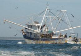 Inspectores roban camarón a pescadores