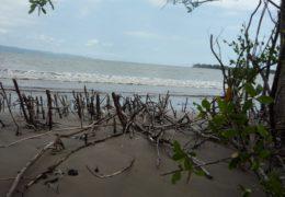 Nayarit deforesta 2% de manglares al año