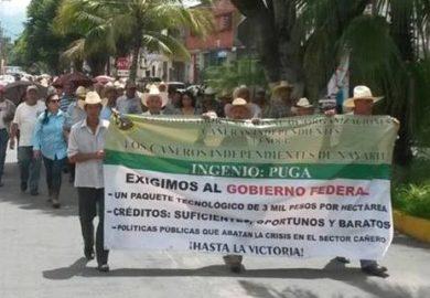 Cañeros en bancarrota se hacen escuchar, los apoya la diputada Ibarra
