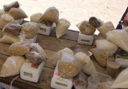 Comunidades de Nayarit presentan síntomas de hambruna
