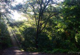 Alertan sobre daños a especies de reserva ecológica del San Juan