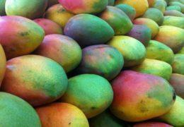 Se propone crear parque agroindustrial en Rosamorada