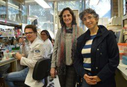 Mexicanas desarrollan molécula contra el cáncer de mama