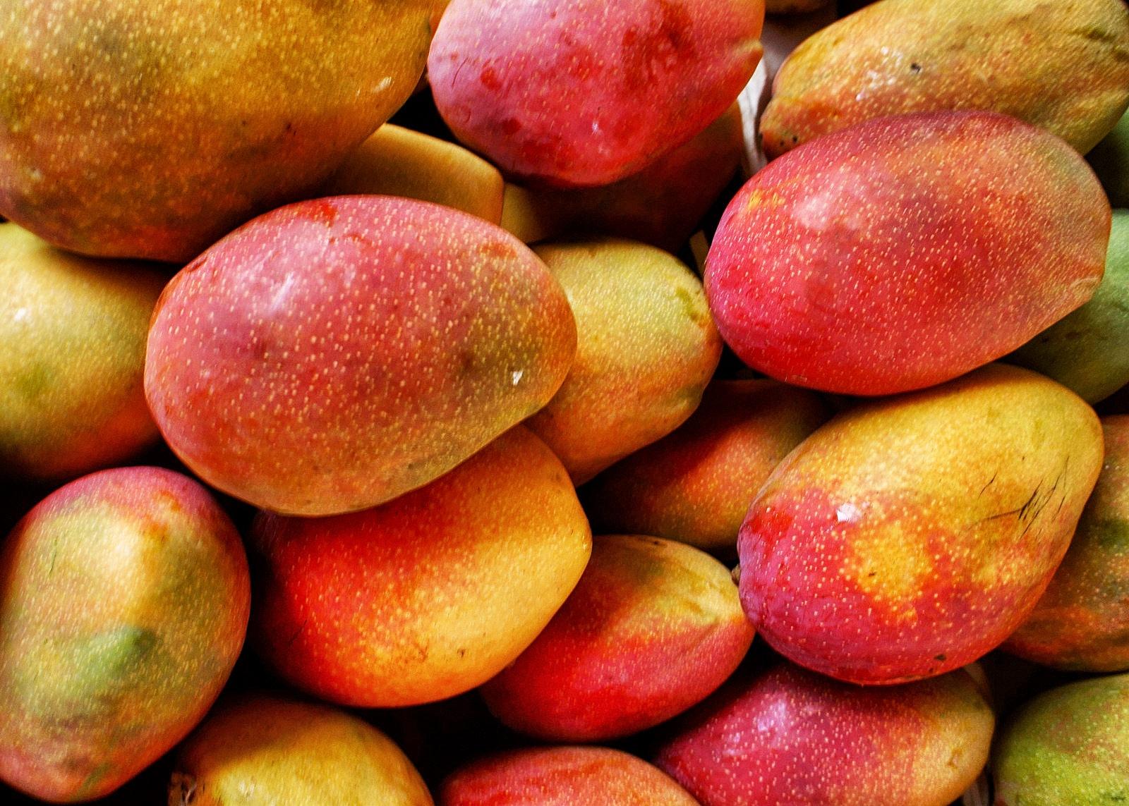 Respalda Gobierno de Nayarit a productores de mango