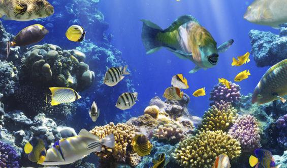 Ecologistas piden al gobierno federal preservar el hábitat marino de las Islas Marías.