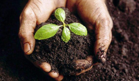 Trabajarán unidos sociedad y Gobierno de México para lograr la integración del bienestar social y el cuidado del medio ambiente
