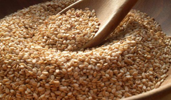 Impulsarán Sader y cadena de las oleaginosas investigación en mejoramiento de variedades para aumentar productividad
