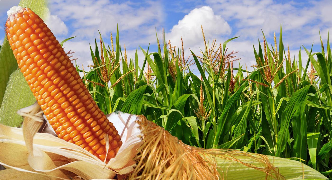 Indispensable la sanidad agrícola para acabar con el hambre y la pobreza