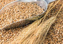 Proyectan desarrollar soluciones poscosecha para pequeños productores de granos