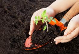 Se sembrarán 29 millones de plantas en viveros de Veracruz