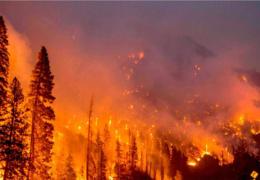 Gobierno de México despliega más de 3,800 brigadistas para el combate de incendios forestales