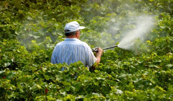 Gobierno federal integra grupo institucional para regular plaguicidas