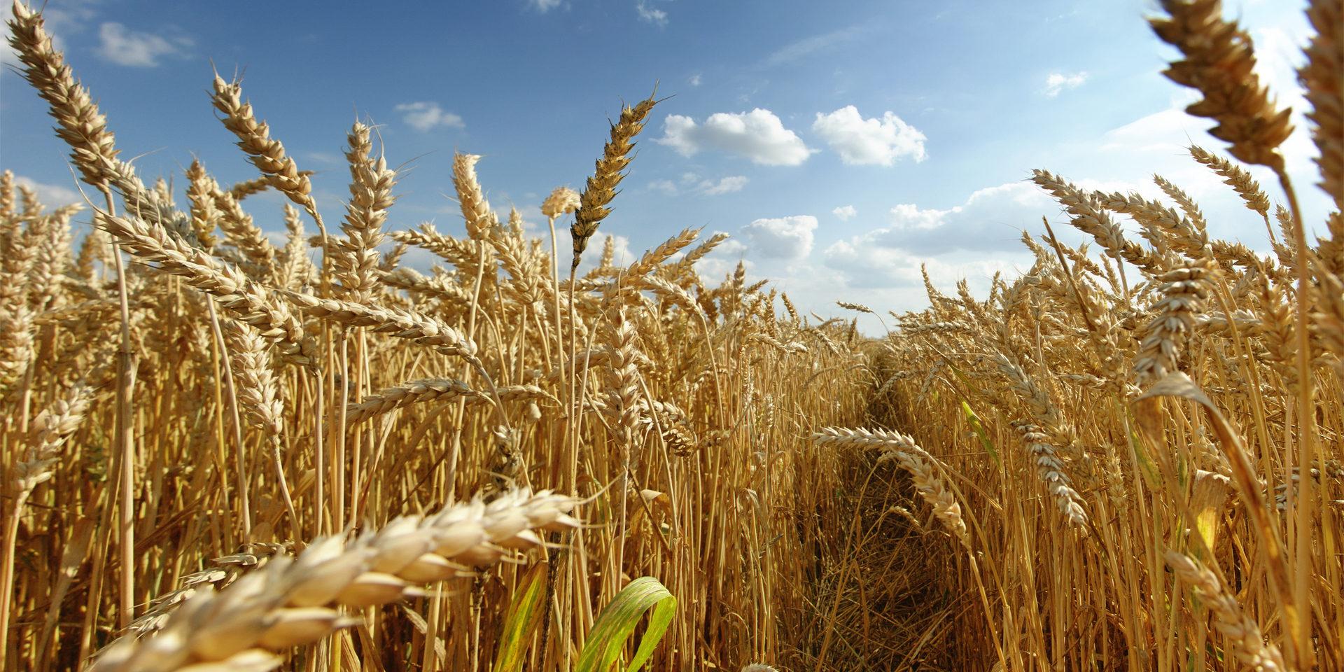 Conjuntan acciones para la producción de granos de forma sustentable e incluyente