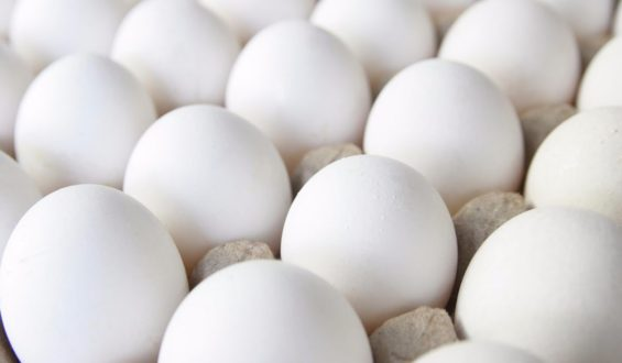 Prevé Sader aumento en producción de carne de pollo y huevo para el 2019