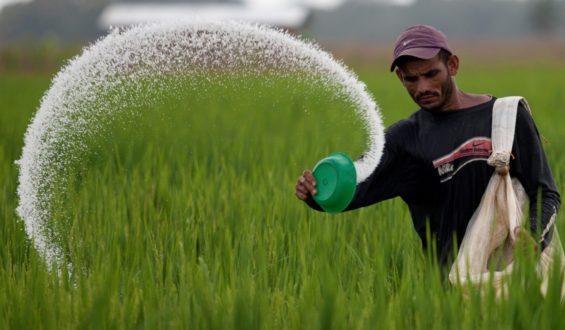 Se realiza entrega directa de fertilizantes a pequeños productores de maíz, frijol y arroz de Guerrero