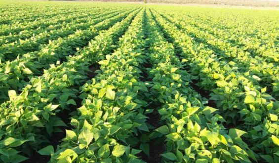 Presidente refrenda rescate del campo con énfasis en los pequeños productores