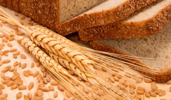 Estiman aumento de 15.6% en producción nacional de trigo panificable