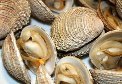 Operativos de Conapesca en contra de pesca furtiva en el país logran la retención de 1.6 toneladas de productos