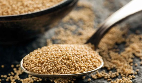 Presentan productores Plan para el Desarrollo Sustentable del Amaranto