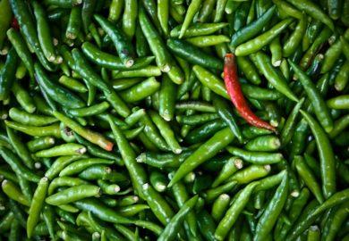 Sustancia del chile es alternativa contra la obesidad