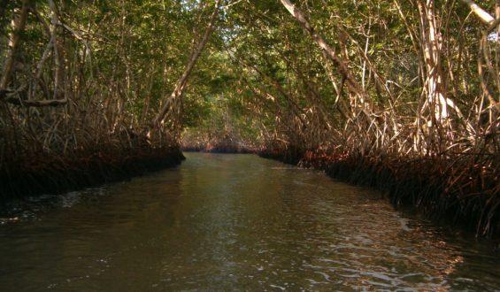 Recuperan casi mil hectáreas de reserva protegida en Chiapas