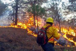 Apagan 20 incendios forestales en México; hay 43 activos