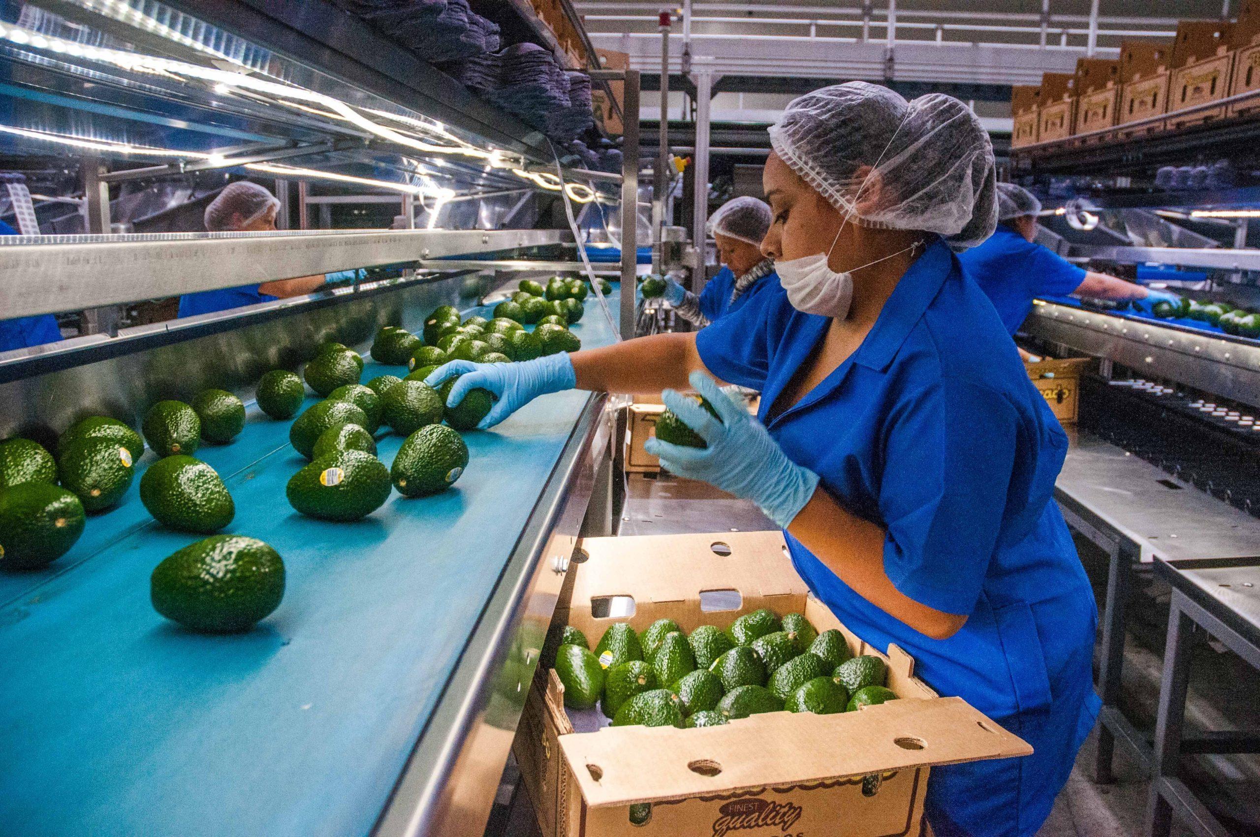 Vigilará México indagatoria de EU a exportaciones agrícolas